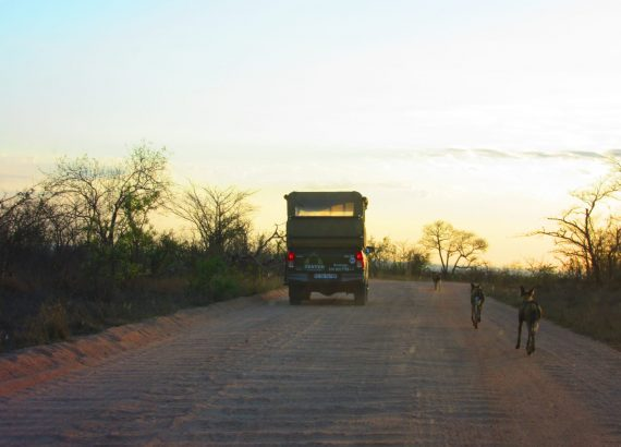 Sunrise on Safari with the Wild Dogs in Kruger National Park
