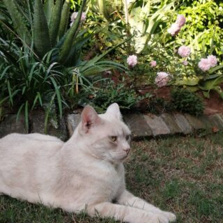 The prettiest creations in the photo, baby roses and a gentle kitty. Been a very hot, and humid - sub tropical climate, day so we are outside enjoying supplying blood to mosquitoes and the cooler evening air.